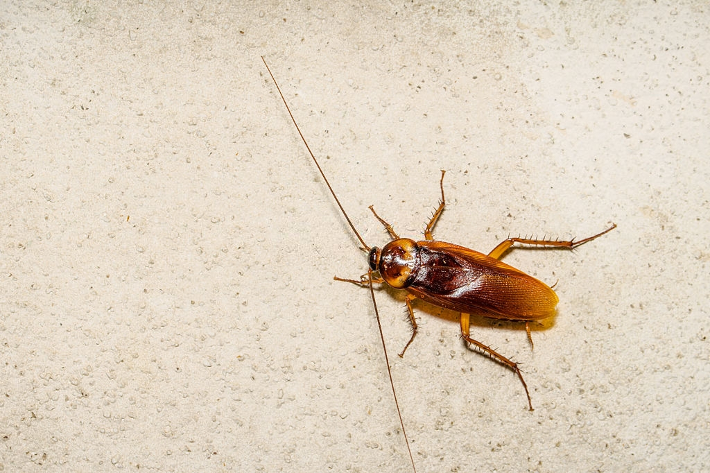 Cockroach Control, Pest Control in West Watford, Holywell, WD18. Call Now 020 8166 9746