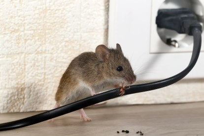 Pest Control in West Watford, Holywell, WD18. Call Now! 020 8166 9746