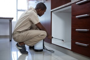 Pest Inspection, Pest Control in West Watford, Holywell, WD18. Call Now 020 8166 9746